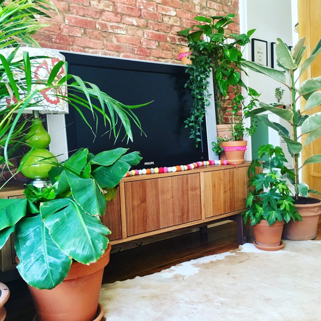 TV surrounded by house plants and green lamp